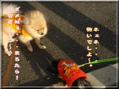 b0078073_20105196.jpg