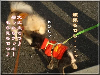 b0078073_20115543.jpg