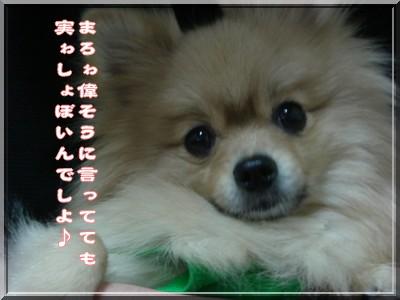 b0078073_2045352.jpg