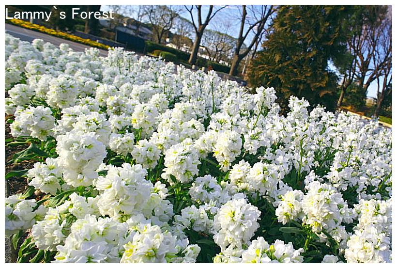 f0014815_20114397.jpg
