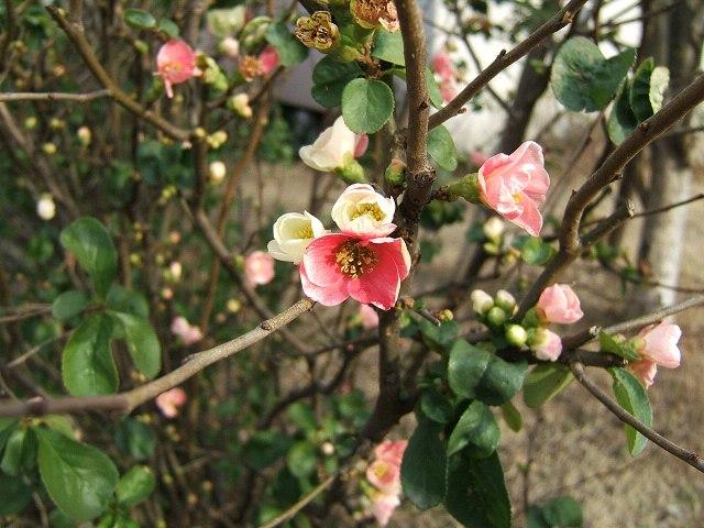 冬の花もまた_e0089232_14183348.jpg