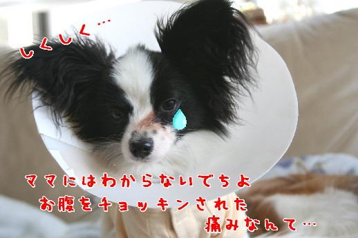 d0013149_021111.jpg