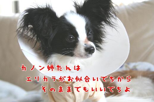 d0013149_23311985.jpg