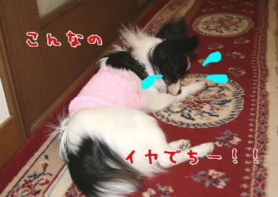 d0013149_23594650.jpg