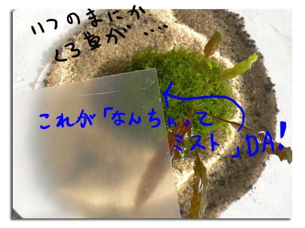 d0042049_10241198.jpg