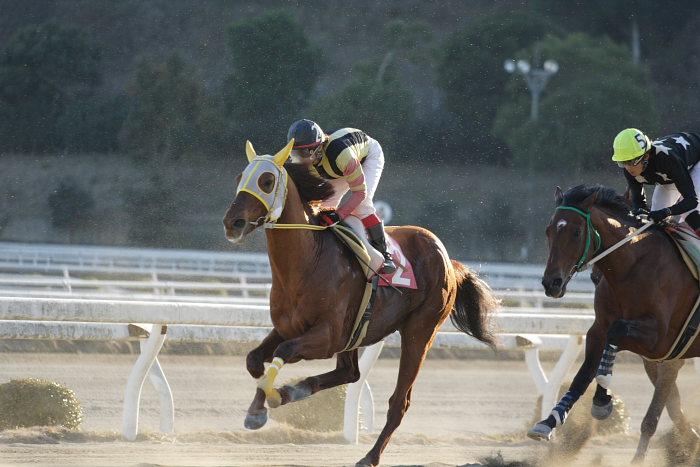 2007年1月14日(日) 高知競馬 10R ガーネット特別_a0077663_18413248.jpg