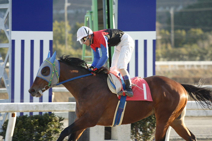 2007年1月14日(日) 高知競馬 10R ガーネット特別_a0077663_18422124.jpg