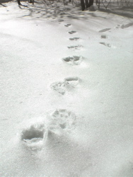 今年は暖冬ですね。_d0028589_1325532.jpg