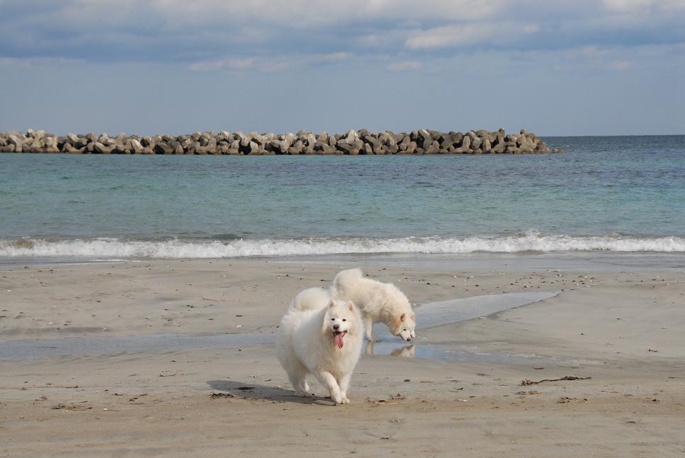 初めての海♪_a0049296_17314071.jpg