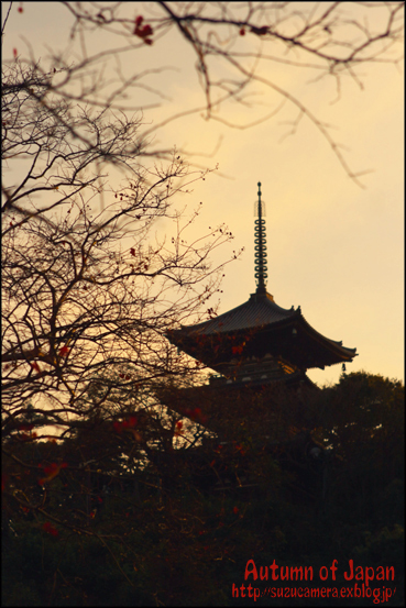 日本の秋_f0100215_1856179.jpg