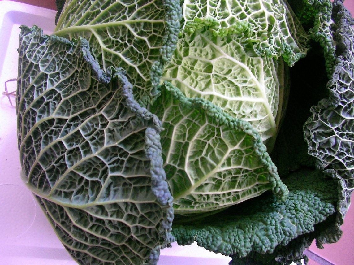 珍しいお野菜です♪_e0025817_1913529.jpg
