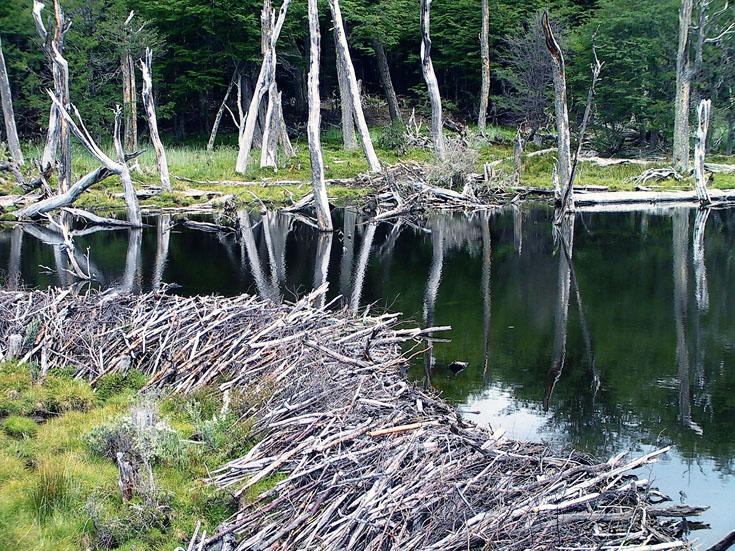 世界の湖 パタゴニア  チリ_e0108650_1293460.jpg