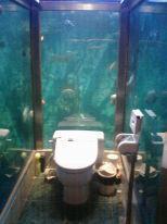 ■水族館で用を足す_e0094583_18511099.jpg