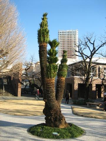 東京の快晴天気が続く_d0027795_17291612.jpg