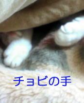 b0105719_19375548.jpg