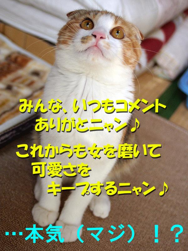 a0088031_18342697.jpg