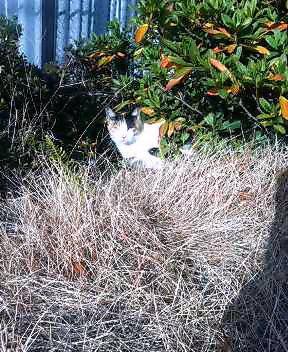 関西弁の猫でんねん (カウントやめます)2007年1月19日_d0083265_17293899.jpg