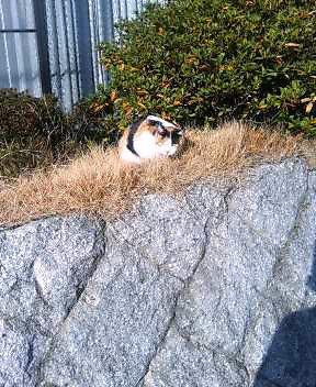 関西弁の猫でんねん (カウントやめます)2007年1月19日_d0083265_17364372.jpg
