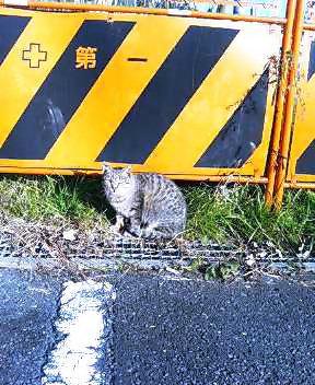 関西弁の猫でんねん (カウントやめます)2007年1月19日_d0083265_17401542.jpg