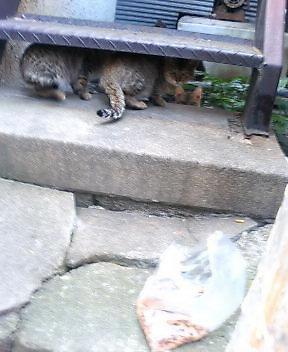 関西弁の猫でんねん (カウントやめます)2007年1月19日_d0083265_17424317.jpg