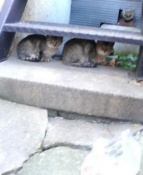 関西弁の猫でんねん (カウントやめます)2007年1月19日_d0083265_17453954.jpg