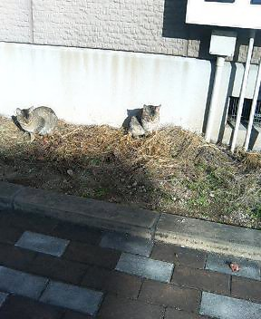 関西弁の猫でんねん (カウントやめます)2007年1月19日_d0083265_1748325.jpg