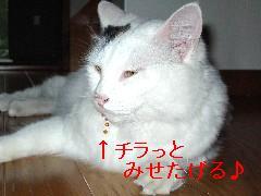 c0032073_1565087.jpg