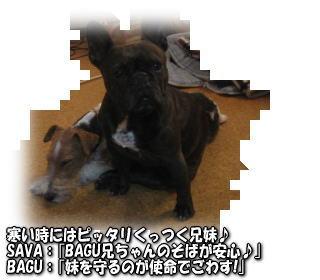 a0037682_21255032.jpg