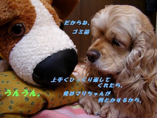 b0067012_153274.jpg