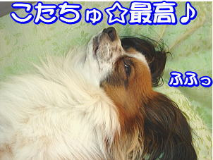 f0011845_14719.jpg