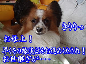f0011845_17032.jpg