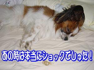 f0011845_172061.jpg