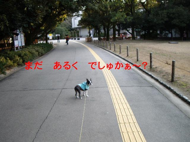 e0098547_1351130.jpg