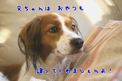 d0013149_0193479.jpg
