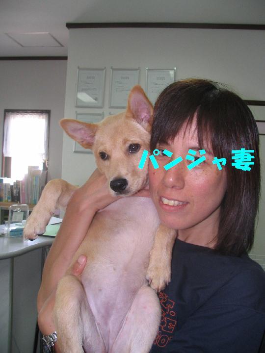 れんげちゃん_f0128542_4321452.jpg