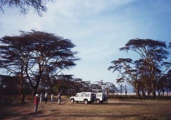 キリマンジャロ登頂記 (12) ンゴロンゴロのクレーターでサファリ_c0011649_021335.jpg