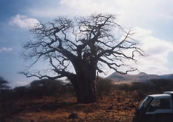 キリマンジャロ登頂記 (12) ンゴロンゴロのクレーターでサファリ_c0011649_0314466.jpg