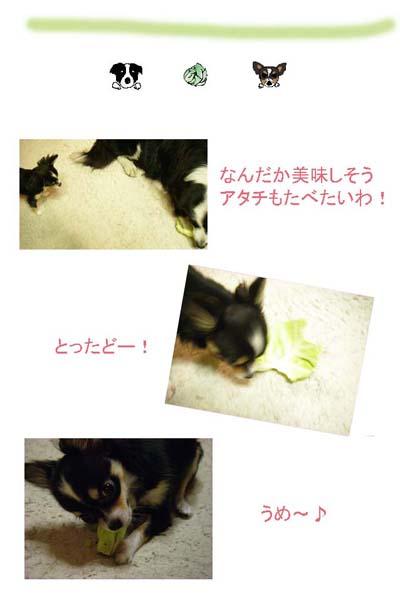 f0114893_1245571.jpg