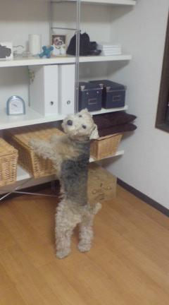 疲れた犬は幸せ_c0099133_0373391.jpg