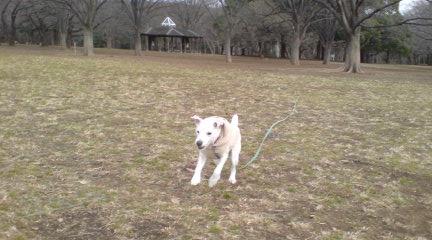 疲れた犬は幸せ_c0099133_0393813.jpg