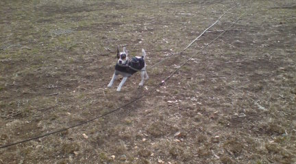 疲れた犬は幸せ_c0099133_124671.jpg