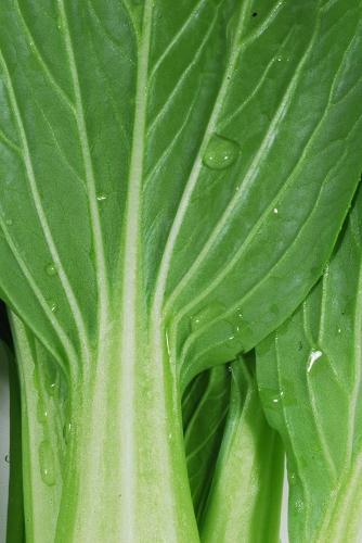 野菜ヤサイベジタブル_f0050534_1622975.jpg