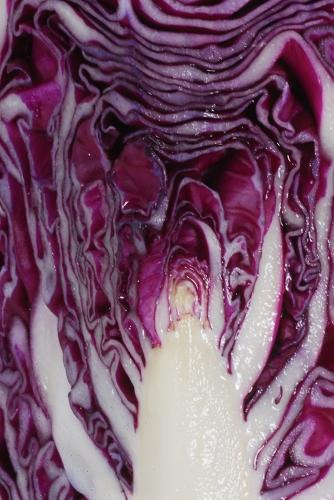 野菜ヤサイベジタブル_f0050534_1633162.jpg