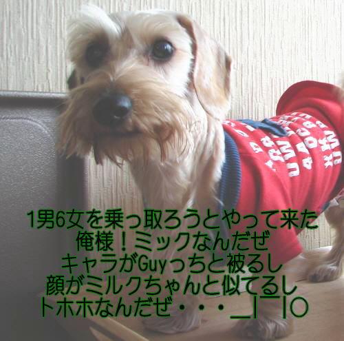e0111338_1725630.jpg
