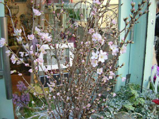 オークリーフ(春の花木)_f0049672_12595862.jpg