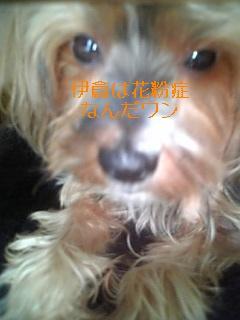 f0118009_1635278.jpg