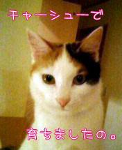 c0096342_16173016.jpg