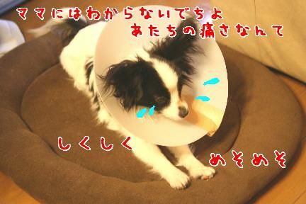 d0013149_0383972.jpg