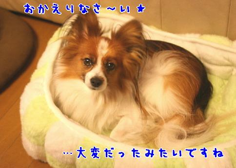 d0013149_11781.jpg