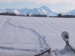 宿の前の雪原を歩いてみた。_f0096216_20515231.jpg